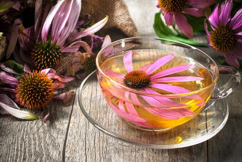 echinacea čaj imunita