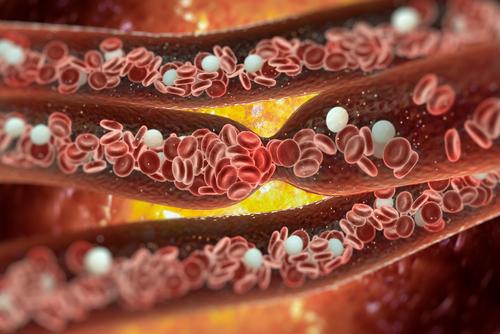 vitamín B1 tiamín cievy