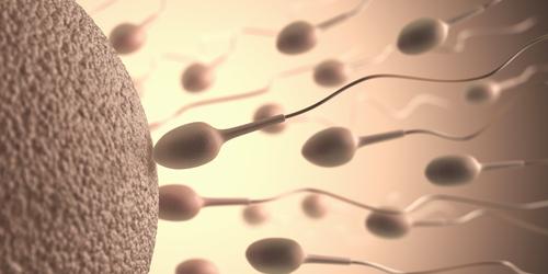 muzska-neplodnost spermie