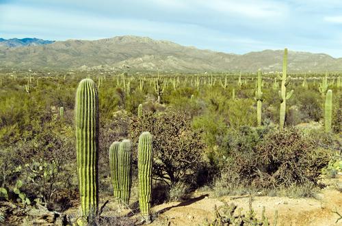 Lekárnička na cesty: Aké lieky si (ne) môžem zobrať do zahraničia kaktus