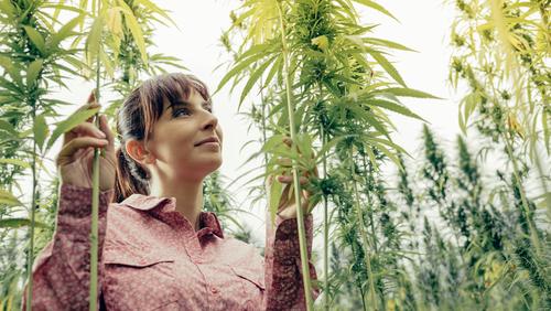 marihuana liek konope