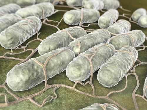 salmonelóza pod mikroskopom