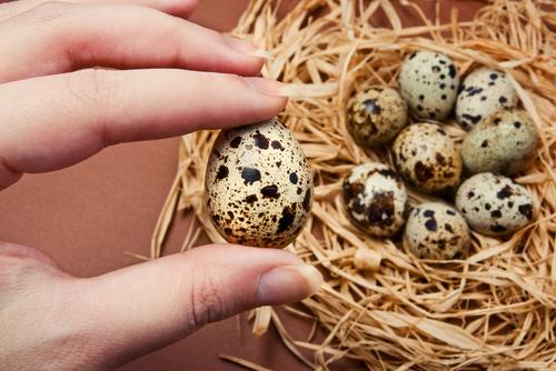 prepelicie-vajcia-cholesterol