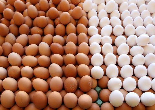 biele vajíčka hnedé vajíčka