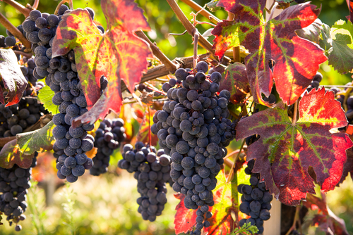 červené víno a srdce