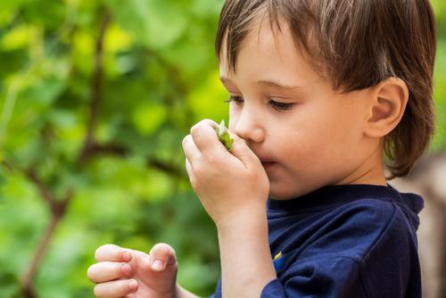mäta alergia