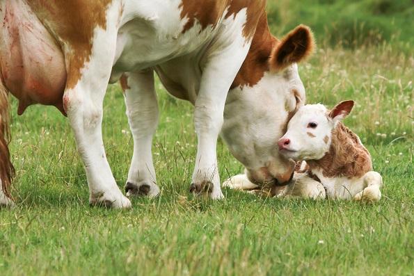 mliečne výrobky na Slovensku
