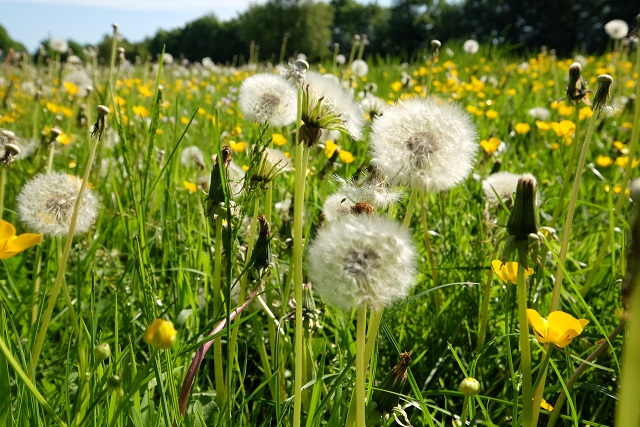 rhinallergy-alergia-na-peľ