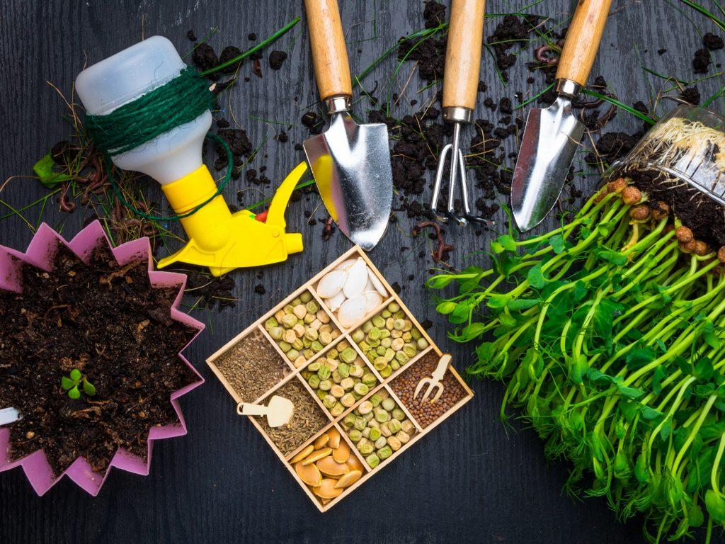 Pestovanie mikrozeleniny