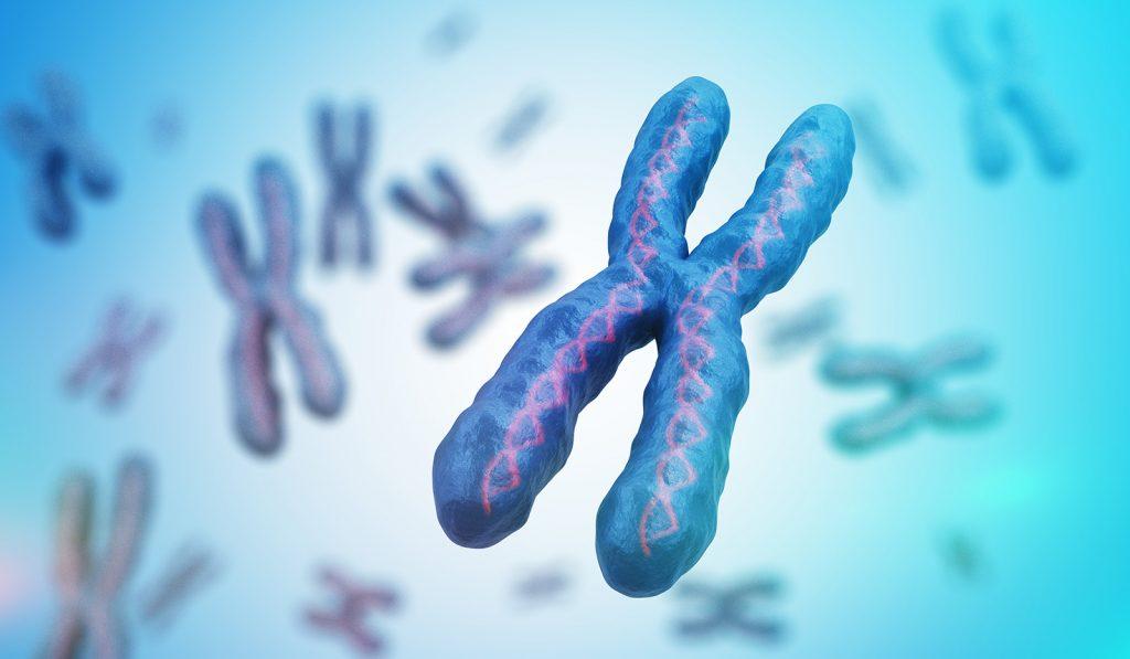 Chromozómy