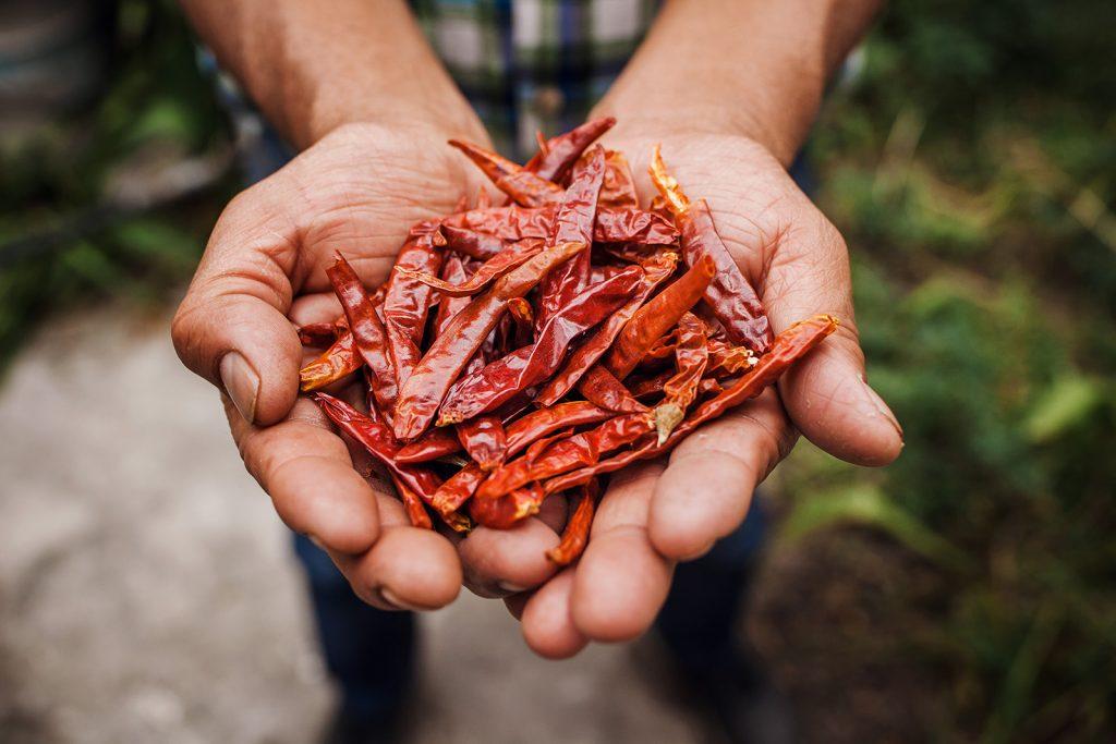 Farmár s čili papričkami v dlaniach